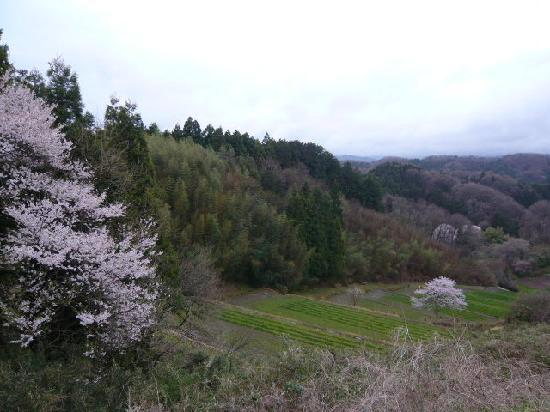 The ruins of Nihonmatsu Castle: 棚田