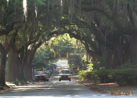 Savannah, Georgien: brick street and trees