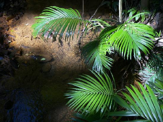 Centenary Lakes - Cairns Botanic Gardens: ferns in abundance