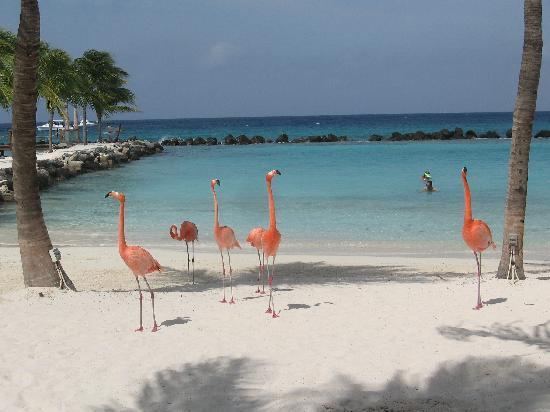 Renaissance Aruba Resort Flamingo Beach
