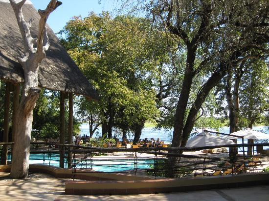 swimming pool and chobe river view picture of chobe. Black Bedroom Furniture Sets. Home Design Ideas