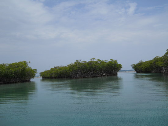 Eco Journeys  Tour: The Mangroves