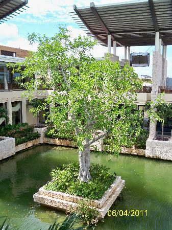 Banyan Tree Mayakoba: banyan tree