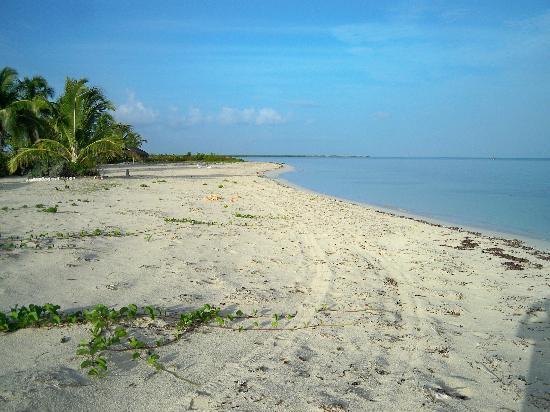 North Beach Island: Beach