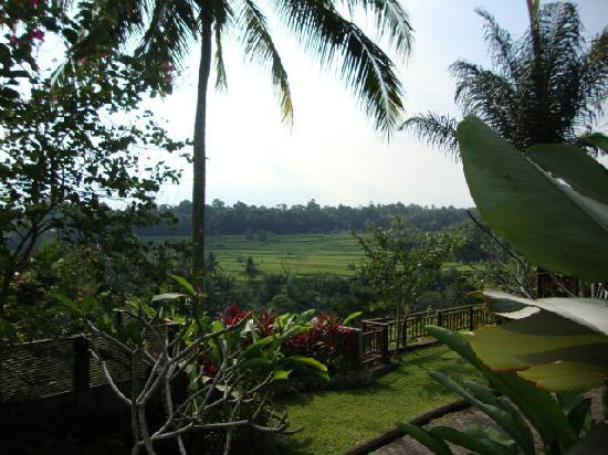The Samaya Bali Ubud: View from Villa 106