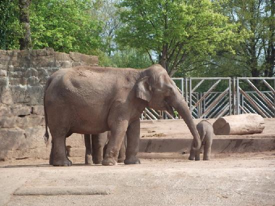Elephant Enclosure Was Spacious And Interesting Picture