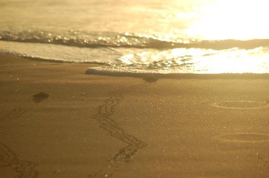 Sea Turtle, Inc.: Almost home!