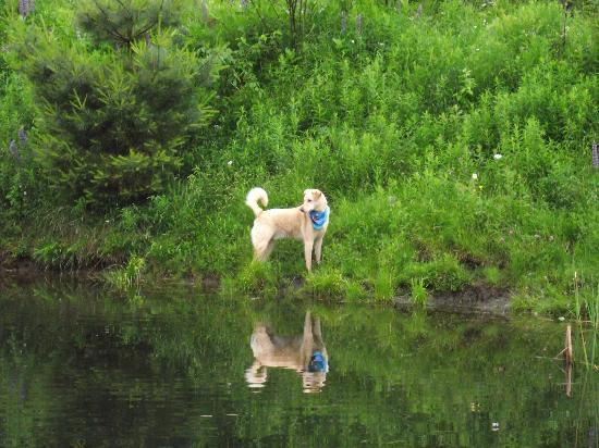 At one of the ponds at dog mountain