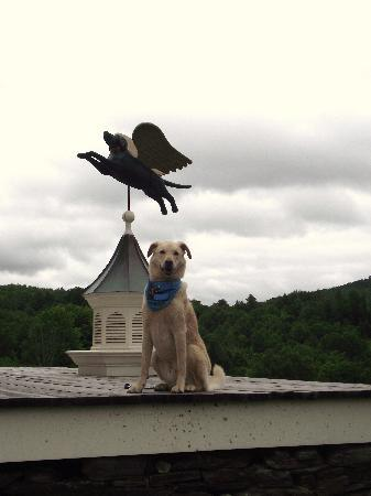 Dog Mountain: With one of Steven Huneck's creations (Dog with wings)