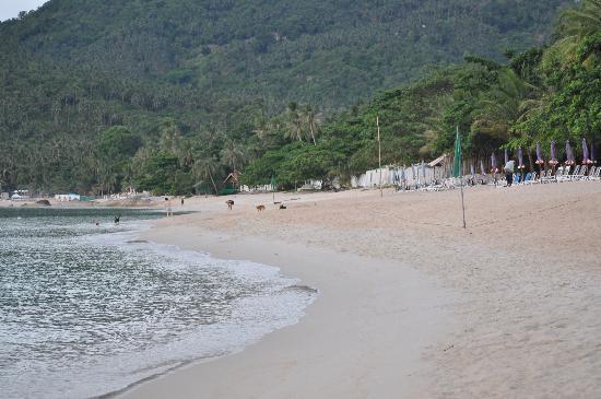 First Bungalow Beach Resort: Hotelstrand