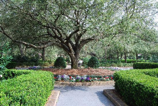 Bellingrath Gardens and Home: There were lots of huge old trees.