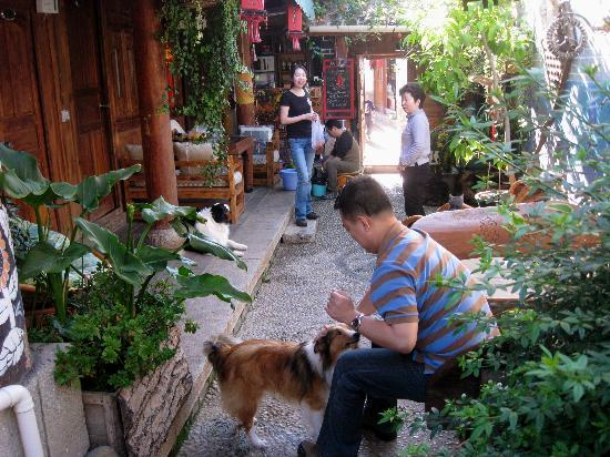 No.68 Hostel: Common area.  Our friend petting Milk Tea
