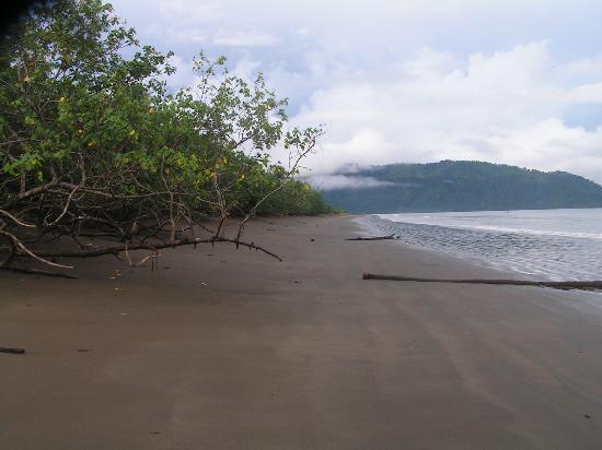 Jardín Botánico del Pacifico: Beach