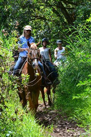 Maui Stables : Trotting through the trails