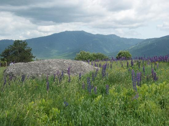 The Highlands Inn : lupines in the mountains