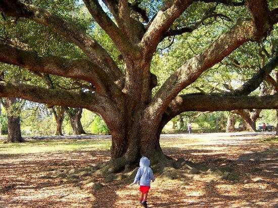 "Audubon Park: What I call the ""tree of life"" lol"