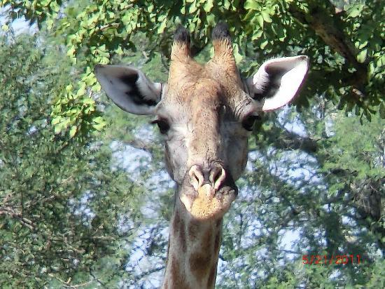 Zambia: Here's lookin' at you kid!!