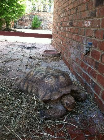 Cape Fear Serpentarium: turtle