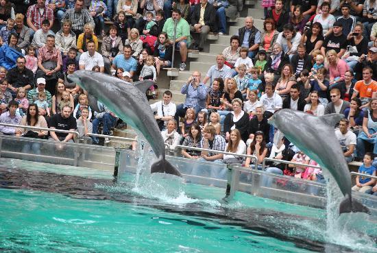 Duisburg, Alemania: Dolphin show