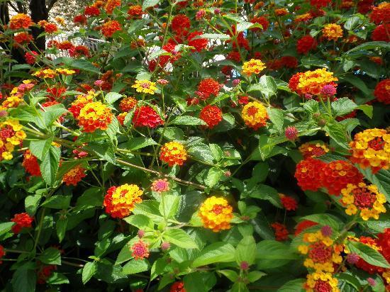 San Antonio Corfu Resort: flowers in the grounds
