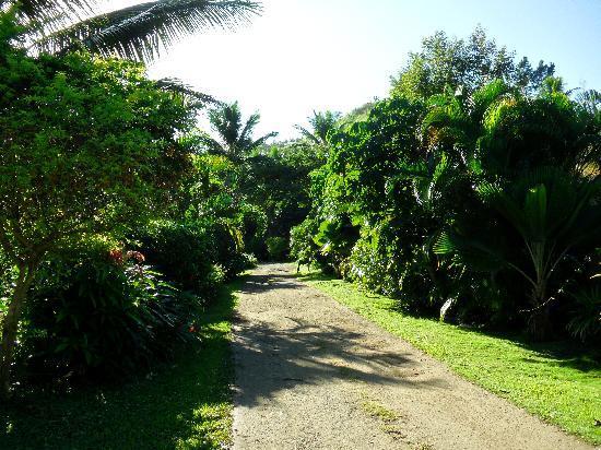 The Beachouse : pretty gardens surround dorms and bures