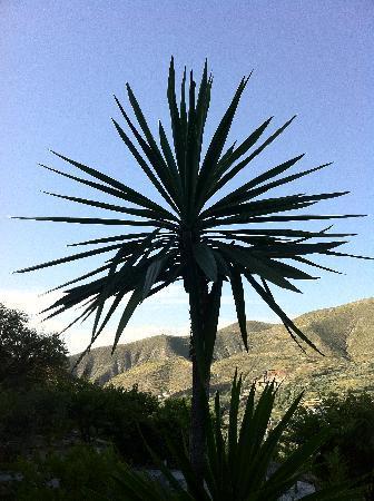 La Almunia del Valle: Un palmier