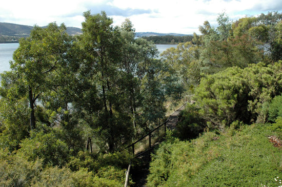 Inverawe Native Gardens: Trees