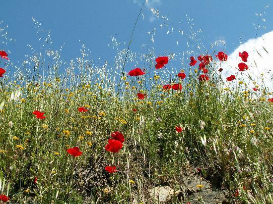 Hotel los Berchules: Flowers Everywhere