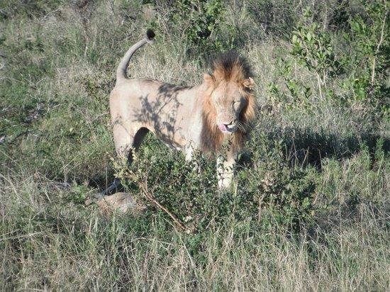 andBeyond Ngala Safari Lodge 사진