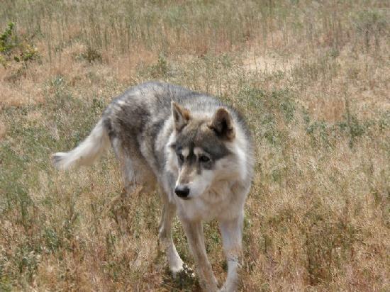 Rocky Mountain Wildlife Park: Porcupine