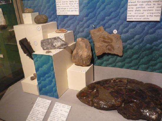 Canmore Museum & Geoscience Centre: Geology