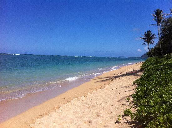 Pat's at Punalu'u : Gorgeous, empty beach