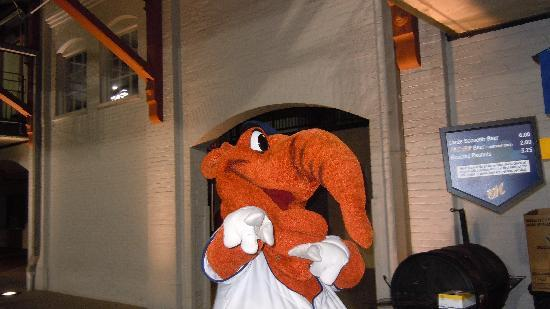 Embassy Suites by Hilton Hotel & Montgomery Conference Center: Big Mo himself...the Montgomery Biscuit Mascot