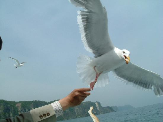 Shakotan-cho, Japón: コメントを入力してください (必須)