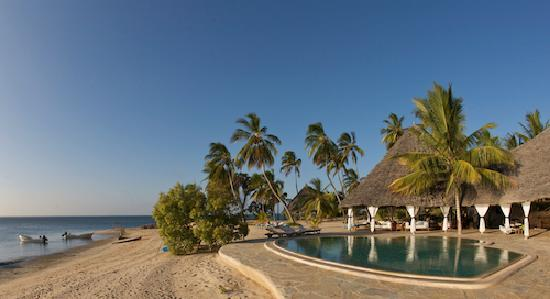 Manda Bay: The pool and palm trees