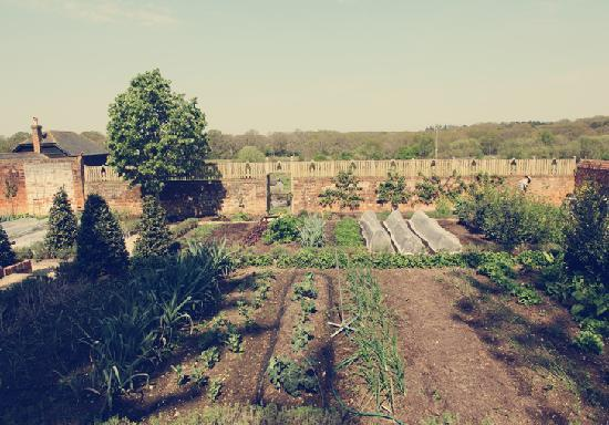 The Pig : Our Walled Kitchen Garden