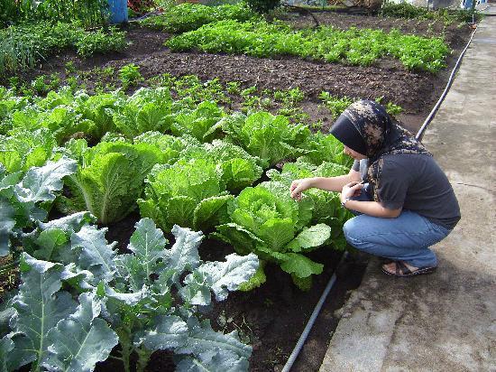 Horas Family Home: fresh vegetables