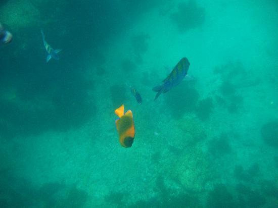 Pez Gato Cabo Sailing Catamarans : snorkeling