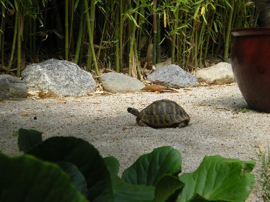 La Magaloun: Le tartarughe