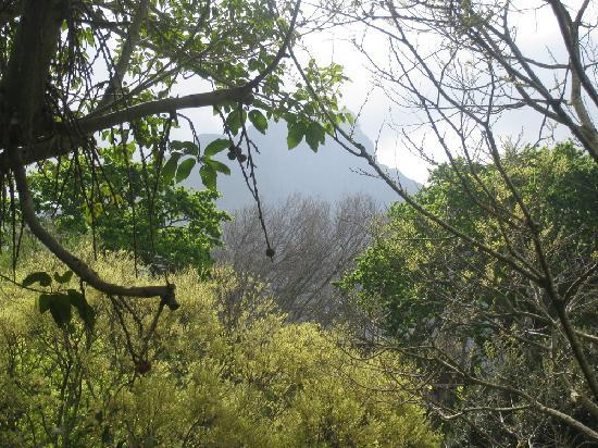 Angsana Spa Vineyard Hotel: Private garden
