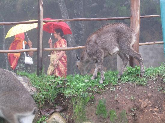 Munnar, India: wildlife? in the rain