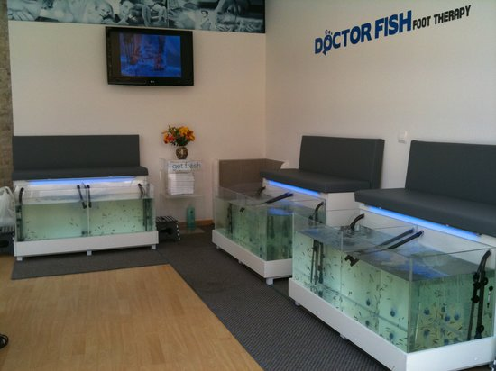 Doctor fish picture of doctor fish foot spa for The fish doctor