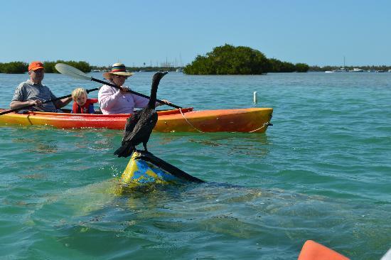 Key West Kayak Eco Tours