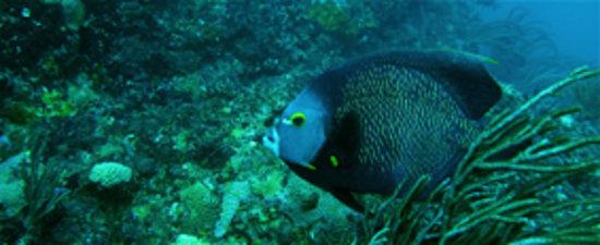 Quimera Divers