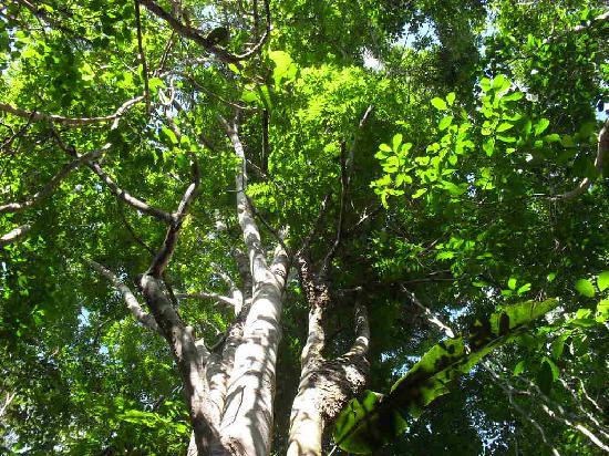 Parque Ecologico Mundo Amazonico : Nature