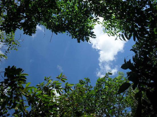 Parque Ecologico Mundo Amazonico : Jungle