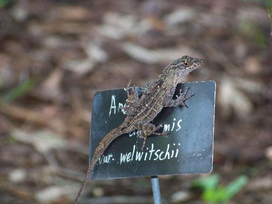 Harry P. Leu Gardens: One of the natives you can meet in warm weather.