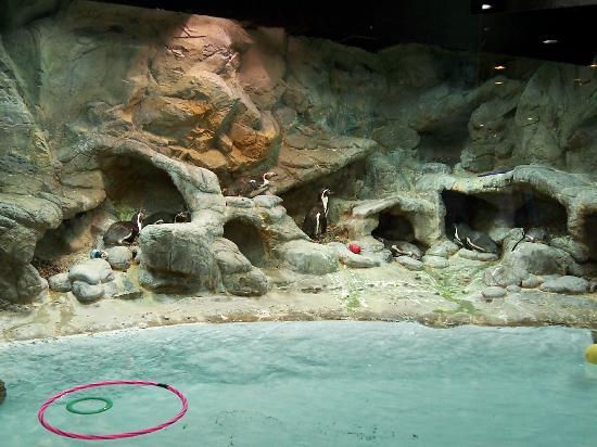 Aquarium Of Niagara Picture Of Aquarium Of Niagara