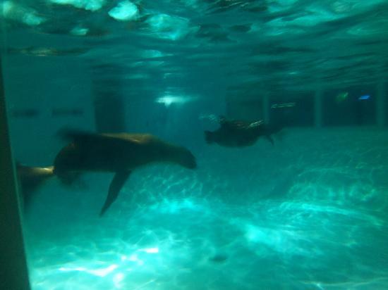 2 Big Catfish Picture Of Aquarium Of Niagara Niagara