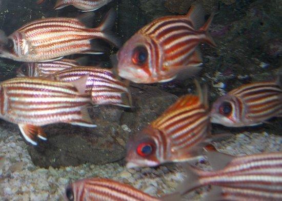 Chanthaburi Province, Thailand: fish